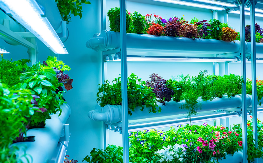 LEDライトを野菜や植物の栽培に使うメリット