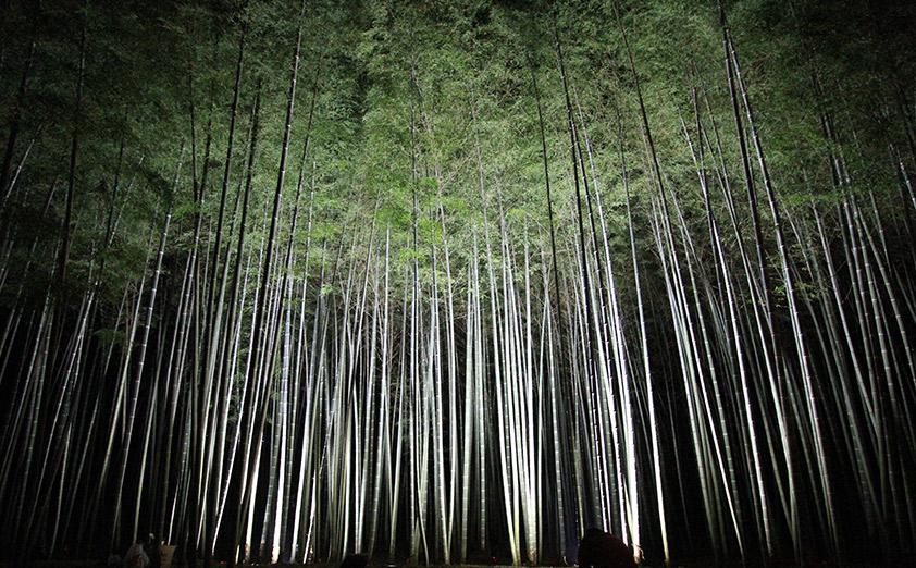 筍狩りや野宿体験もできる「若竹の杜 若山農場」