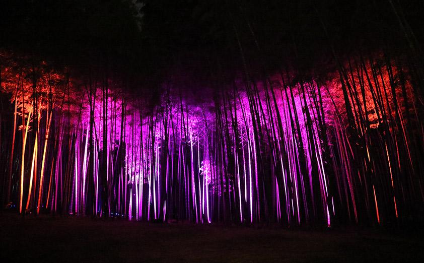 美しい竹林と光の演出が織りなす「かぐや姫からの贈り物」
