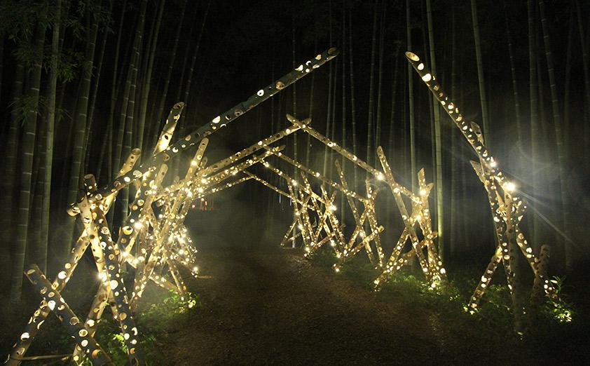 初の夏開催! 若山農場の竹林ライトアップ・イルミネーション